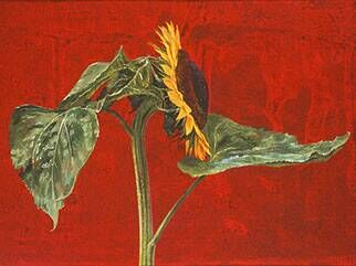 Two Sunflowers against a Red Background