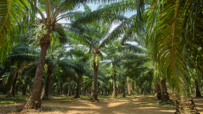 ING to enter NCP-facilitated dialogue with NGOs on palm oil