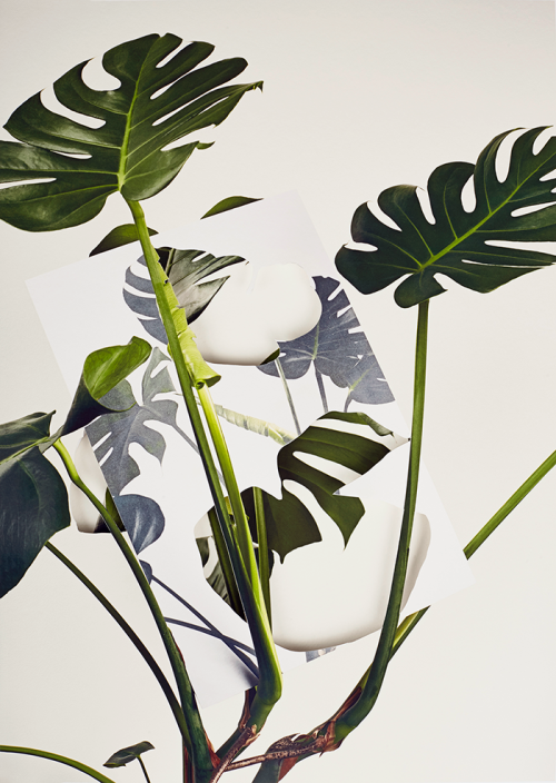 Alma Haser (1989)<br /><em>Monstera Deliciosa, from Pseudo</em>, 2018<br />89 x 63 cm<br />Layered and cut digital pigment prints